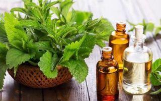 Венотоники при варикозе: крема, таблетки, свечи, травы и продукты