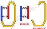 Крапива при сахарном диабете 2 типа: польза, нормы употребления, рецепты