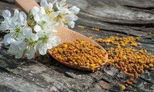 Пчелиная пыльца: лечебные свойства, как принимать, польза и вред