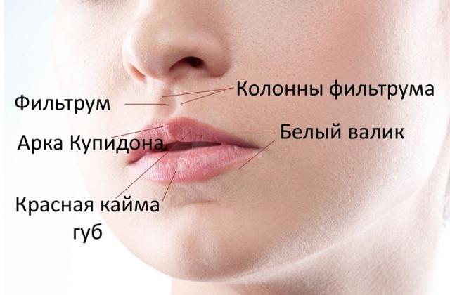 7 советов, чтобы получить шикарные губы