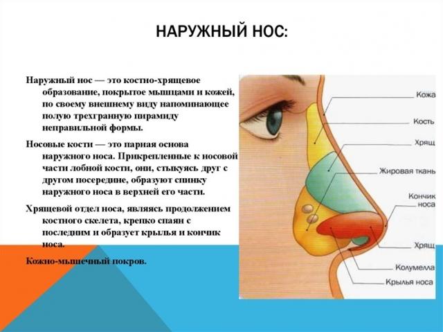 Шишки на носу и внутри него – причины и лечение
