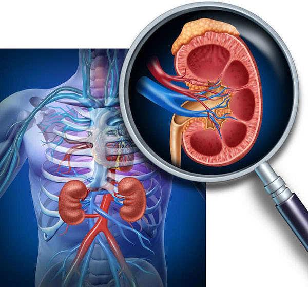 Полиурия при диабете сахарном, несахарном: механизм развития, причины, к чему приводит, симптомы, методы лечения, профилактика