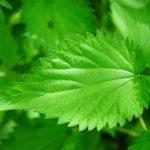 Травы при сахарном диабете 2 типа: какие можно, сборы, лечебные свойства, применение