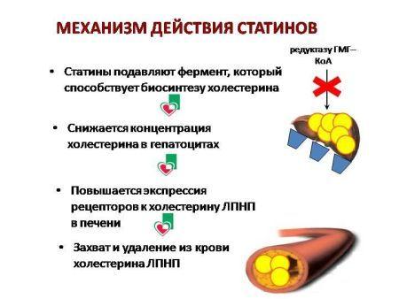 ЛИПТОНОРМ - инструкция по применению, цена, отзывы и аналоги
