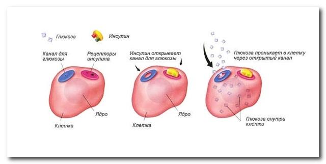 Глюкоза в крови: норма по возрасту, повышенный и пониженный уровень, анализ у женщин, мужчин, детей, как сдавать