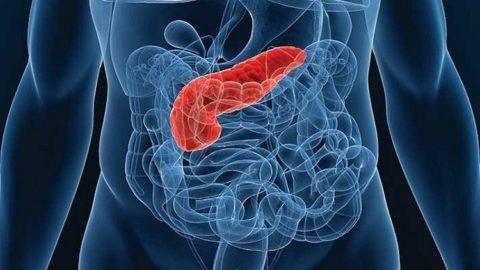 Выработка инсулина: какой орган в организме, что влияет, для чего нужен